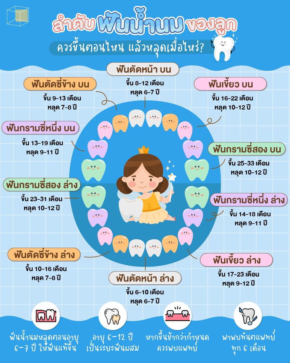 ลำดับการขึ้นและหลุดของฟันน้ำนม