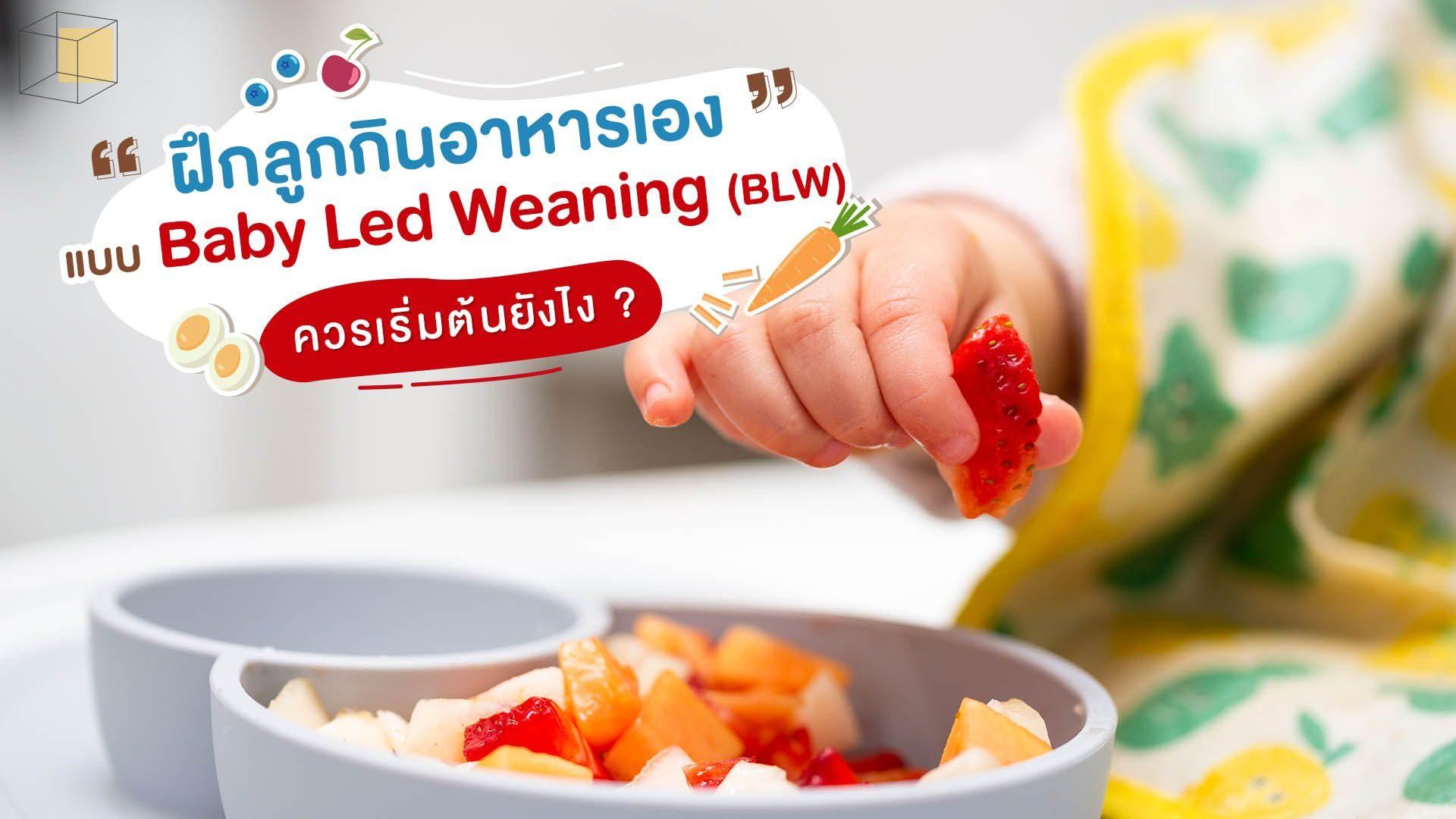 Baby Led Weaning (BLW) วิธีฝึกลูกกินข้าวเองให้เป็น
